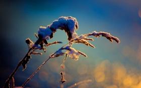 Картинка цвета, макро, снег, природа, фото, фон, обои