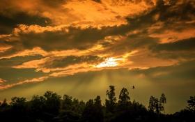 Картинка небо, пейзаж, закат, птица