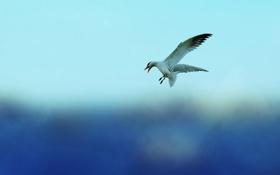 Обои небо, животное, птица, чайка, sky, bird, animal