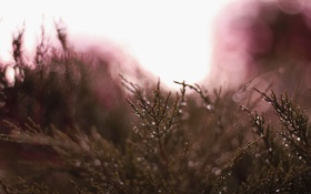 Картинка капли, макро, роса, растение, боке