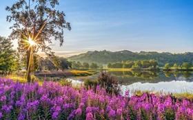 Обои солнце, лучи, свет, деревья, цветы, горы, озеро