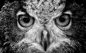 Картинка взгляд, птица, клюв, хищная