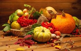 Картинка осень, урожай, тыква, натюрморт, овощи, autumn, still life