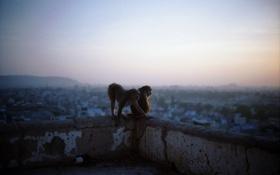 Картинка город, animals, пейзаж, рассвет, обезьяны, животные