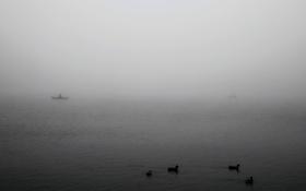 Обои судна, озеро, человек, люди, туман, пейзажи, животные