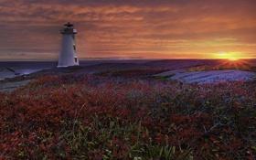 Картинка море, закат, природа, побережье, маяк, кусты