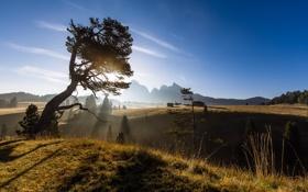 Картинка пейзаж, горы, природа, дерево, утро