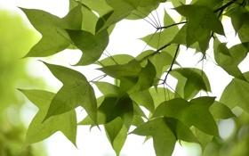 Картинка небо, листья, макро, ветка