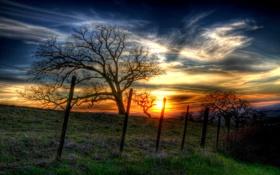 Картинка закат, пейзаж, дерево, забор, лето