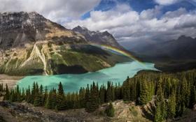 Обои лес, Канада, деревья, природа, горы, озеро, радуга