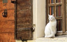 Обои кошка, стена, окно