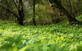 Картинка зелень, лето, трава, деревья, Поляна, лесок