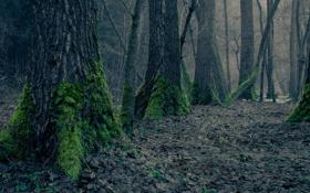 Картинка лес, деревья, природа, листва, мох, сухая