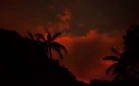 Обои небо, тропики, пальмы, звёзды, вечер