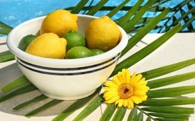 Картинка цветок, капли, тарелка, лайм, фрукты, цитрусы, лимоны