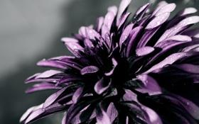 Картинка капли, макро, цветы, лепестки, flowers, macro