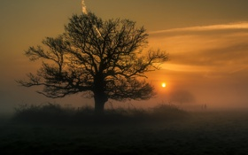 Картинка пейзаж, ночь, природа, туман, дерево