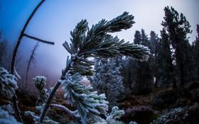 Картинка иней, макро, природа, дерево