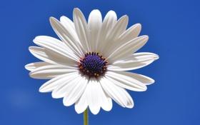 Картинка цветок, небо, лепестки, стебель