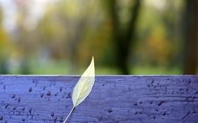 Картинка осень, лист, лавочка, желтое