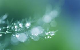 Картинка зелень, трава, вода, капли, макро, природа, зеленый