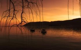 Картинка небо, закат, горы, озеро, лодка, ветка