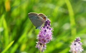 Обои цветок, размытост, насекомое, бабочка, зелень, макро
