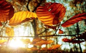 Обои листья, осень, фото, осенние обои, макро картинки, дерево