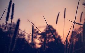 Обои трава, роса, вечер, grass, evening, dew