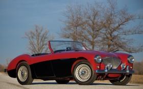 Обои car, auto, trees, classic, 1955, Austin Healey, 100-4
