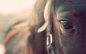 Картинка макро, глаз, конь