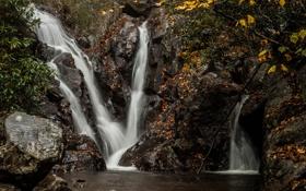 Обои листья, камни, водопады, ветки, осень