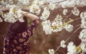 Обои девушка, цветы, дерево, волосы, спина, лепестки, белые