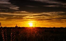 Обои небо, трава, солнце, облака, закат, стебли, куст