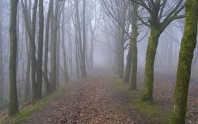 Картинка осень, деревья, туман, парк, аллея