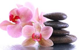 Картинка цветы, капельки, орхидея, спа камни