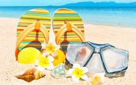 Обои песок, пляж, лето, цветы, ракушки, summer, beach