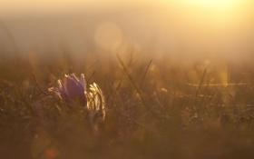 Обои цветок, трава, солнце, макро, свет, тепло, поляна