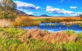 Обои поле, небо, деревья, озеро