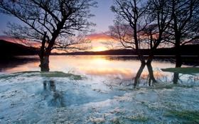 Картинка лед, деревья, закат, озеро, заморозки
