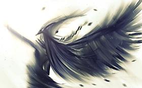Обои арт, крылья, перья, рисунок, ангел