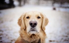 Обои зима, друг, собака