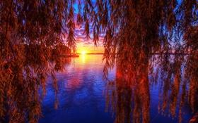 Обои небо, листья, вода, солнце, закат, отражение, ветка