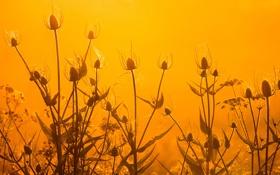 Обои листья, закат, стебель, небо, растение, макро, цветы