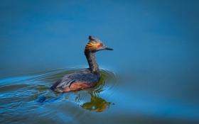 Обои природа, птица, вода