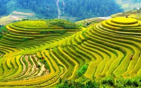 Обои зелень, пейзаж, природа, фото, поля