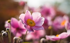 Картинка цветок, лето, макро, розовый