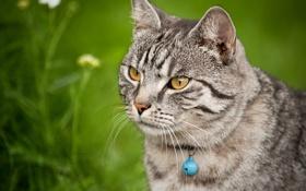 Обои кошка, трава, взгляд, животное