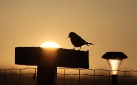 Обои солнце, закат, птица, вечер, фонарь