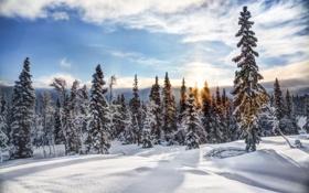 Картинка зима, снег, природа, елки